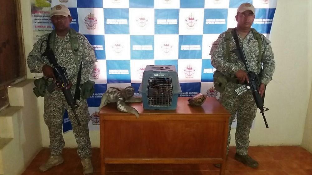Armada Nacional continúa preservando la Fauna  en el Caribe colombiano