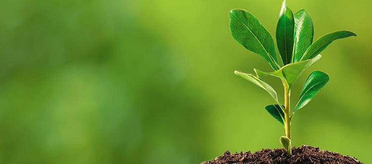 Medio Ambiente en el Sistema Interamericano de Derechos Humanos
